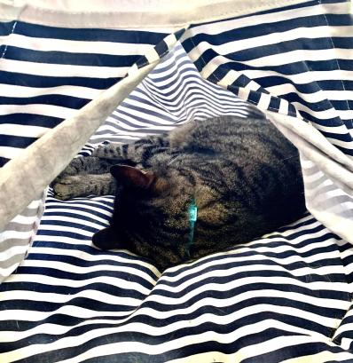 Silver mackrel tabby sleeping inside a blue and white striped mini teepee